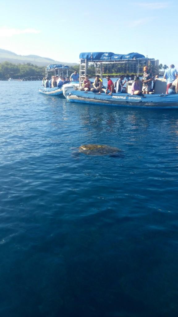 maui raft and snorkle